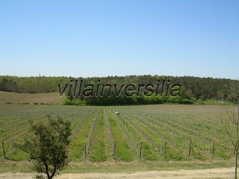 Photo 1/11 for ref. V  612019 azienda Castiglione de
