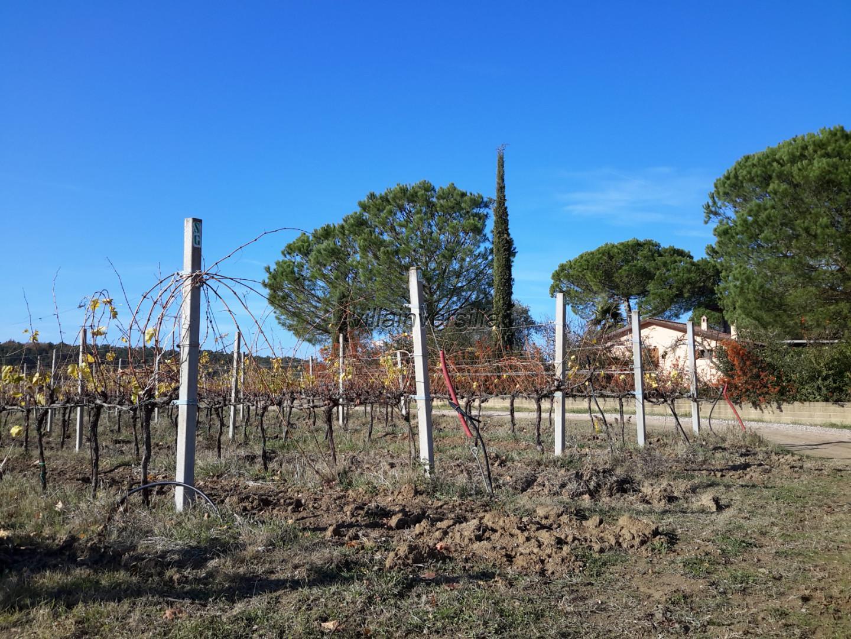 Foto 10/11 per rif. V 622019 casale  Castiglione