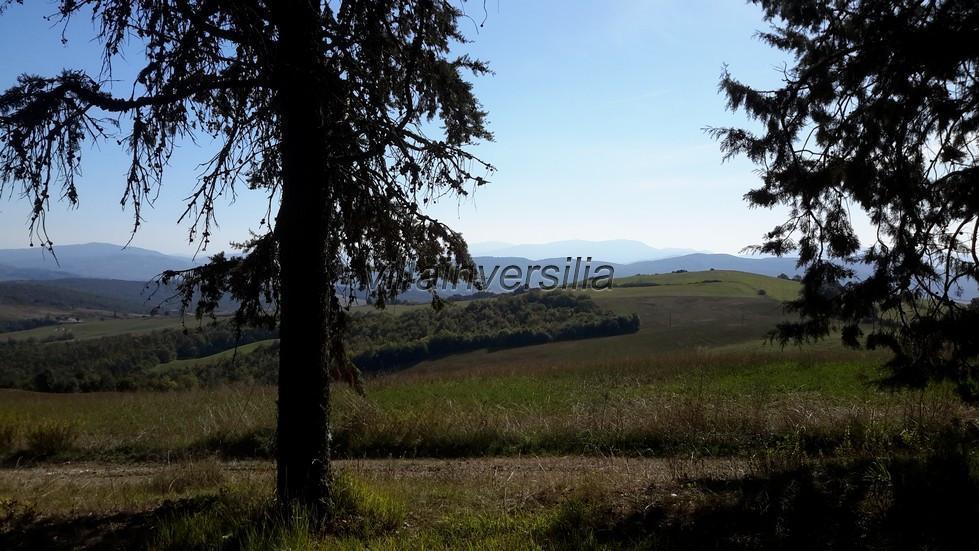 Foto 7/10 per rif. V 692019 podere prov. Siena