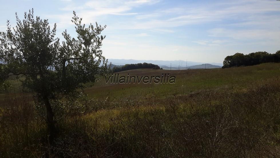 Foto 5/10 per rif. V 692019 podere prov. Siena