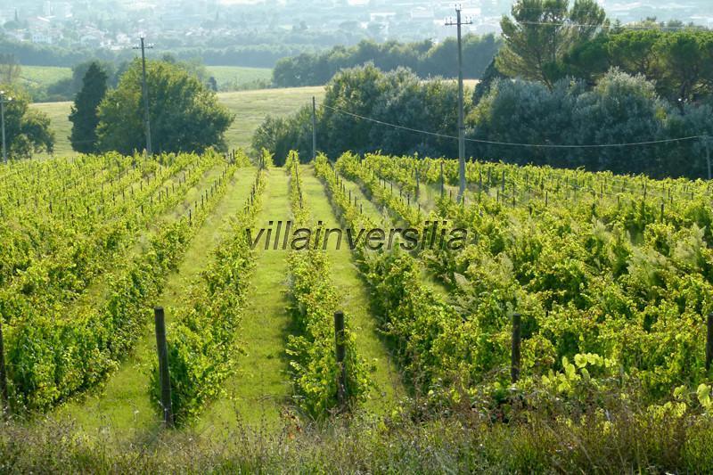 Foto 2/2 per rif. V 22020 tenuta Umbria