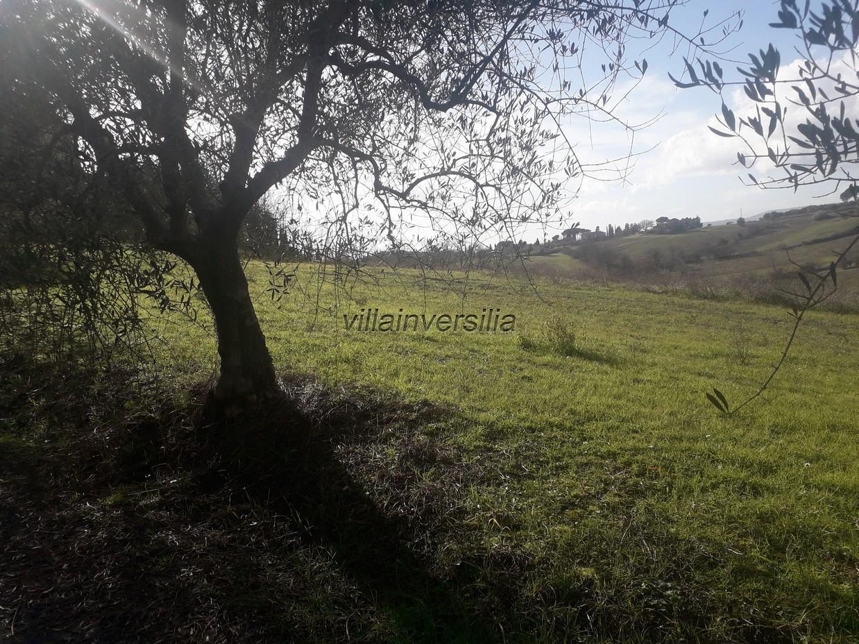 Foto 16/17 per rif. V 42020 casale Siena