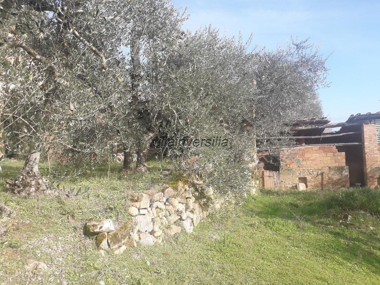 Foto 11/12 per rif. V 52020  casale  Siena