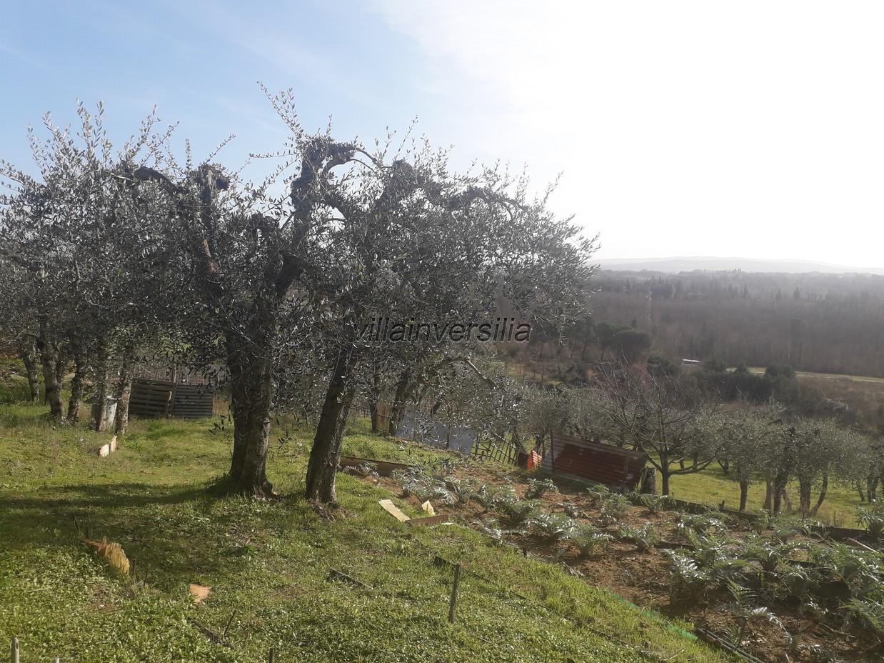 Foto 12/12 per rif. V 52020  casale  Siena