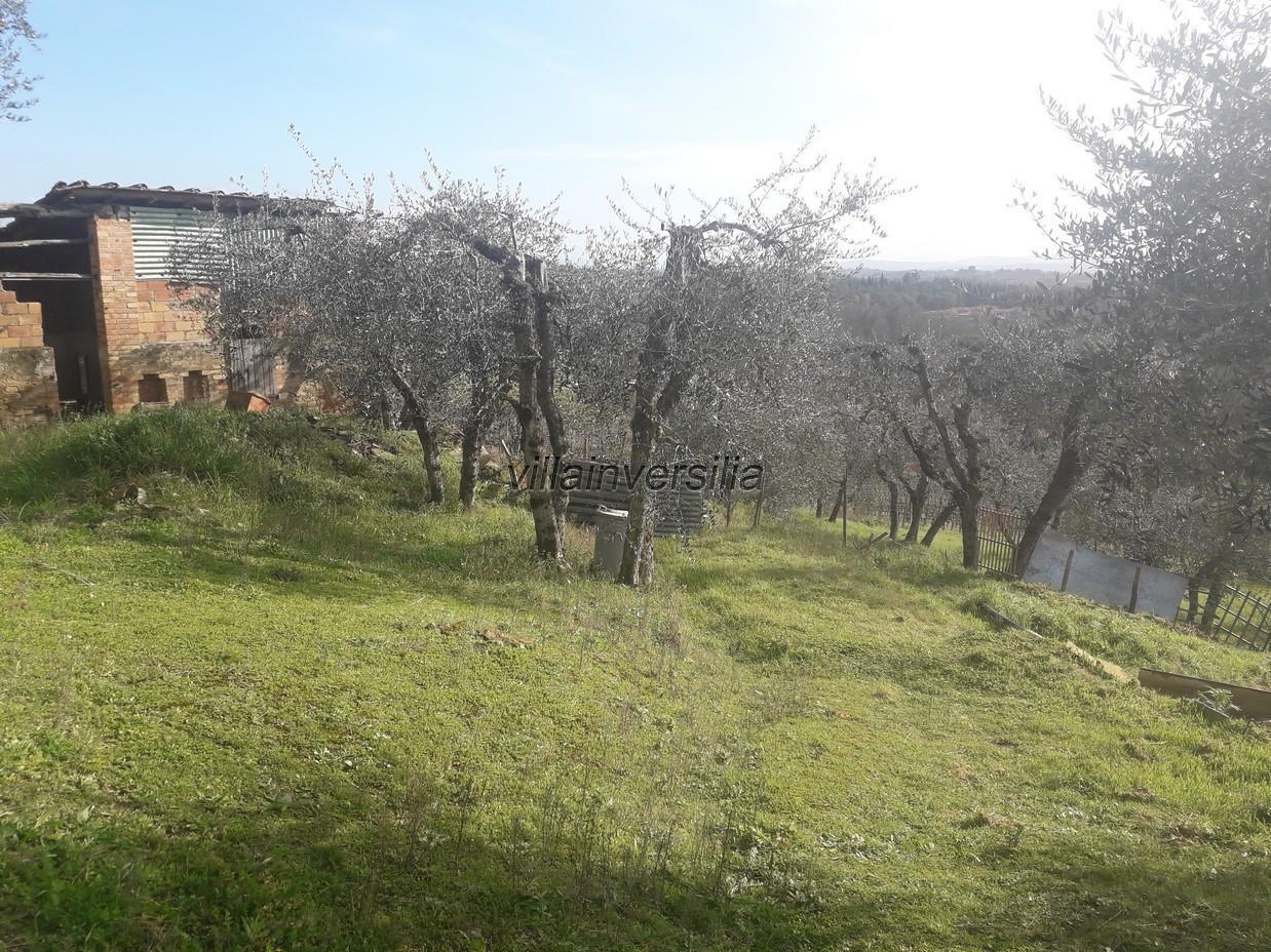 Foto 9/12 per rif. V 52020  casale  Siena