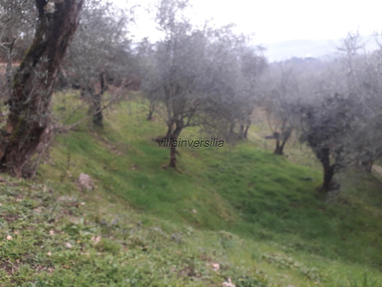 Foto 5/21 per rif. V 162020 podre Lunigiana