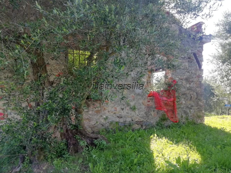 Foto 10/11 per rif. V 552020 collina Massarosa