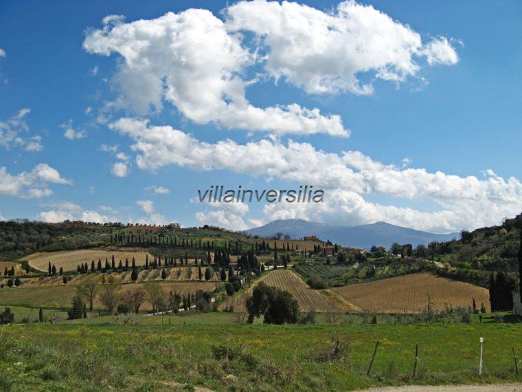 ферма для Montalcino