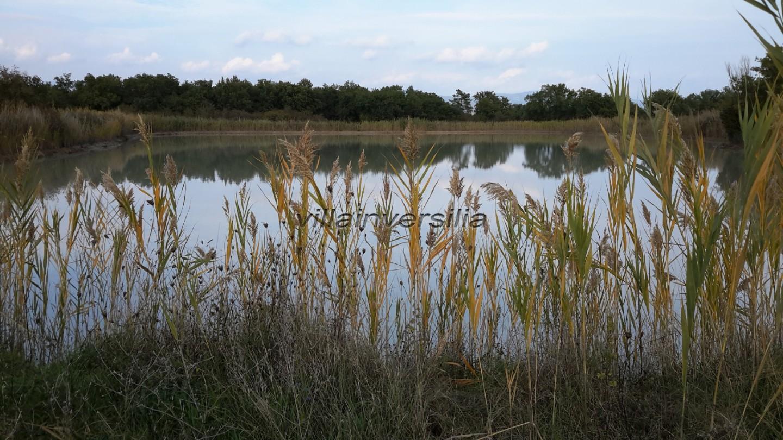 Terreno agricolo a Castiglione del Lago