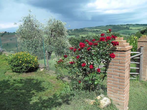 Foto 12/12 per rif. V 362021   casale Manciano
