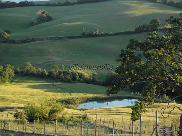 Foto 7/12 per rif. V 362021   casale Manciano