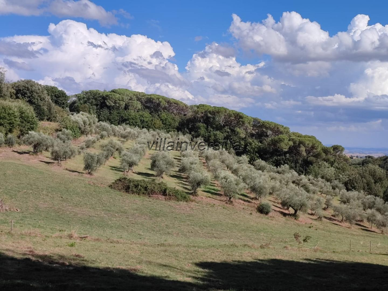 Foto 4/8 per rif. V 432021  rustico Siena