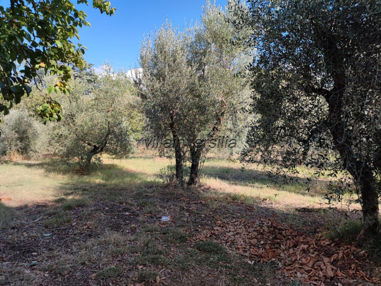 Foto 3/8 per rif. V 432021  rustico Siena